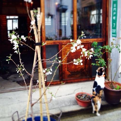 20140329-091536.jpg